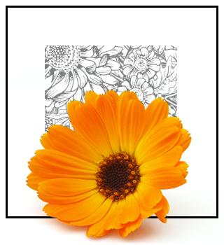 Niche Fragrance - Floral
